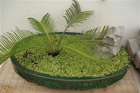 cây trồng, phong thủy, phòng ngủ, phòng khách, ban công, không khí, vận mệnh, gia đình
