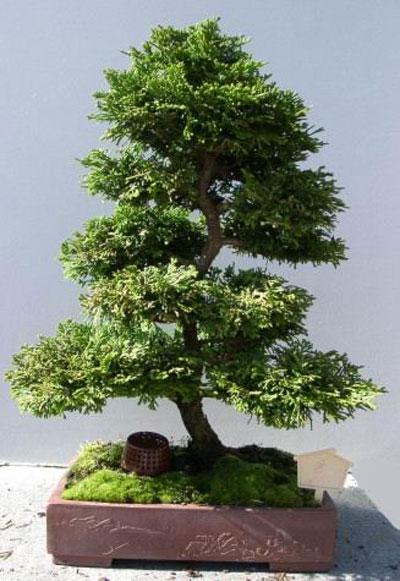 cây cảnh, phong thủy, đào, quất, mai, Tết, dọn nhà đón Tết, trang trí nhà, nhà đẹp, tài lộc