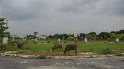 dự án chậm triển khai, biệt thự hoang, thu hồi dự án, bất động sản, mua nhà, bán đất