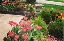 Khu vườn yên tĩnh ngập tràn sắc hoa của mẹ Việt tại Mỹ