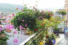 Ngôi nhà có vườn hoa nở suốt bốn mùa ở Quảng Ninh