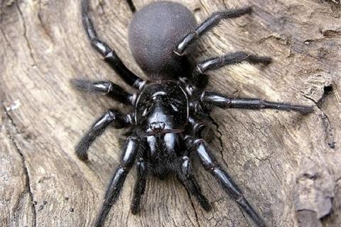 Video: Hàng trăm nhện con bò ngổn ngang sau khi nhện mẹ nổ tung