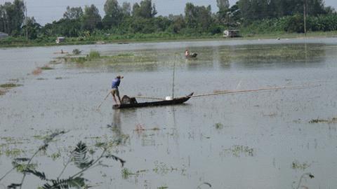 Chinese dams prevent flood in Vietnam's southwestern region? Scarcity of fish in Mekong Delta's flood seasonLate flood sways farmers in Vietnam's southwestern region