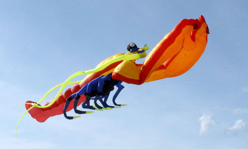 This is the largest kite featuring a crayfish in Vietnam. The kite is 34.7 m long,