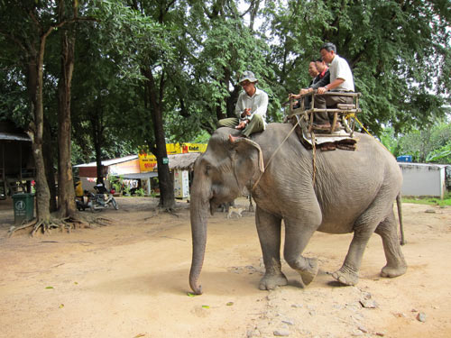 Don Village's elephants in danger