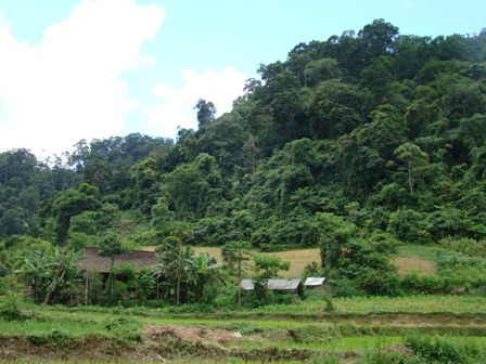 """Community forest"" the effective tool for sustainable forest management"