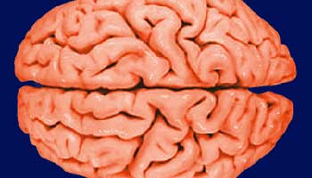 Brain plays role in regulating blood sugar in humans: U.S. study