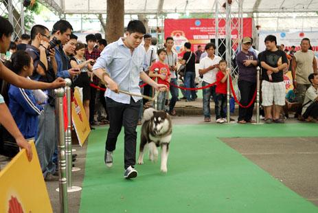 Vietnam, dog show 2012