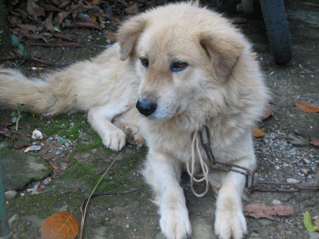 Vietnam, dog, Phu Quoc