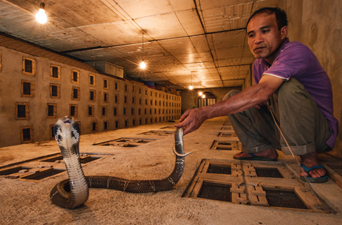 Le Mat, Hanoi, snake, national geographic