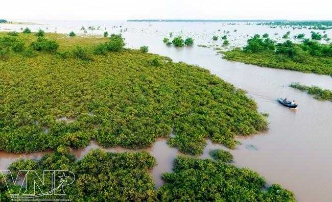 Revival of mangrove forests