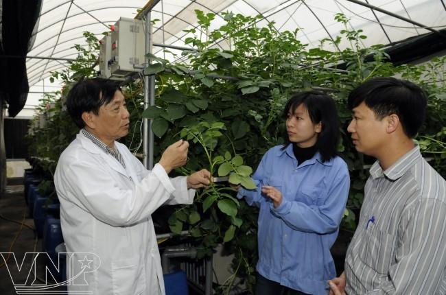 Nguyen Quang Thach, professor, scientist, portrait, aeroponic technology, vietnam