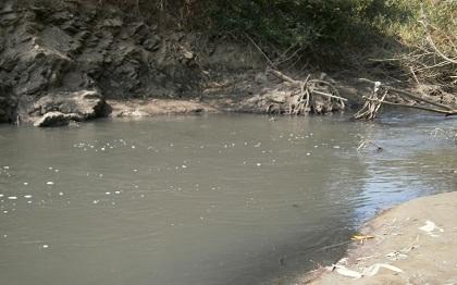 dead fish, serpok river