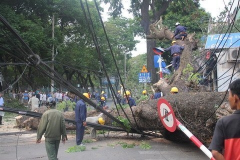 Ancient tree uprooted, Saigon traffic in chaos