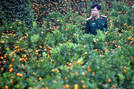 tet flower, new year, cherry, plum, apricot, peach
