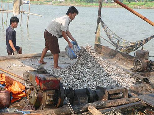 cambodia, fishing, an giang, fishermen