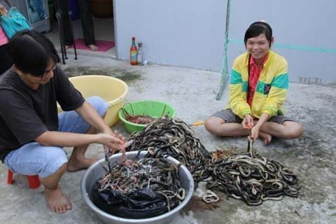 snake, tam nong, tram chim, dong thap, national park, market
