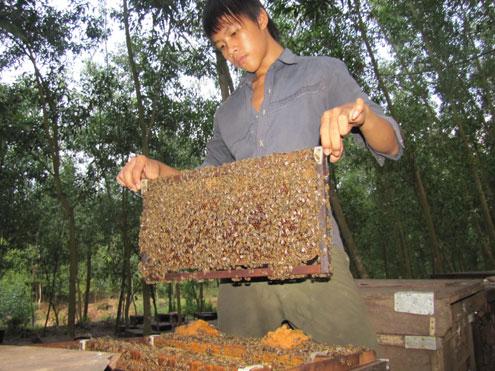 bee, beekeeper, beehive, flower, honey