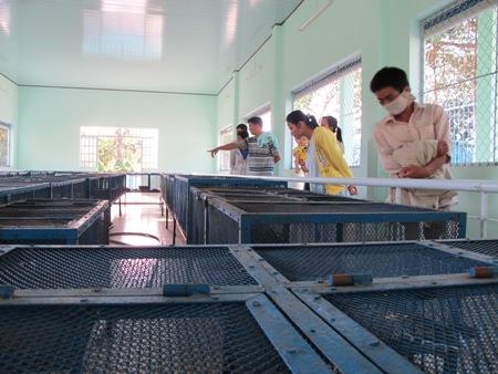 dong tam snake farm, cobra, snake museum