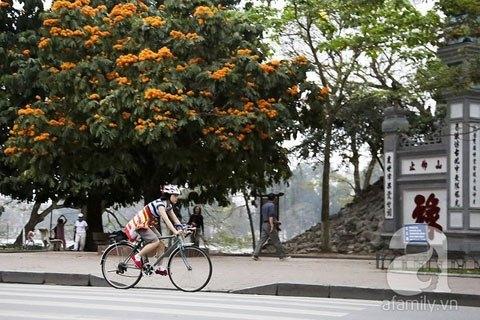 cycling, cyclist, trend, hanoi, bike, bicycle, bikers