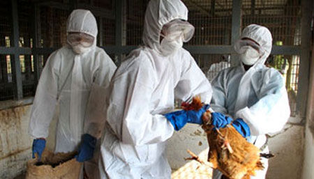 WHO says notified by H7N9 bird flu infections in China