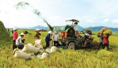 rice, rice farmer, rice export