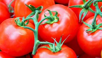 Tomato-soy diet may help reduce prostate cancer risk