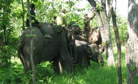 elephant, dak lak, trap, rescue, yok don