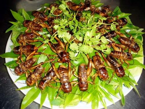 insect food, vietnam, bee, larva, aunt