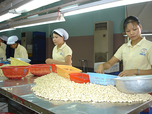Vietnam, cashew nut exports, Vinacas, investment, Indian market, farmers
