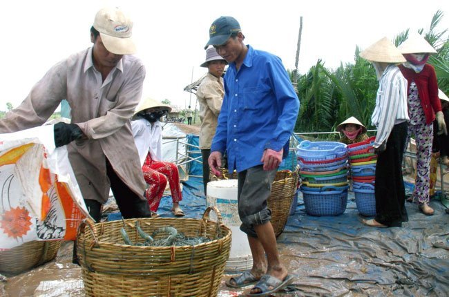 Vietnam, seafood exports, VASEP, technical barriers, Japan, markets