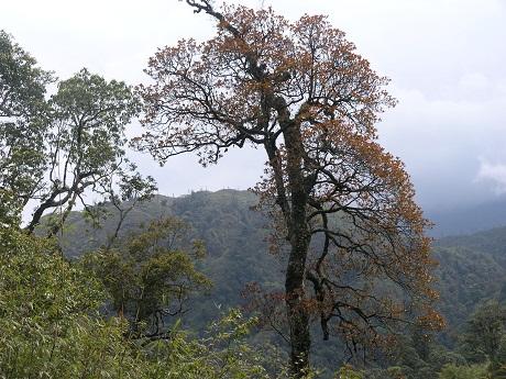 hoang lien son, sapa, national park, floral species