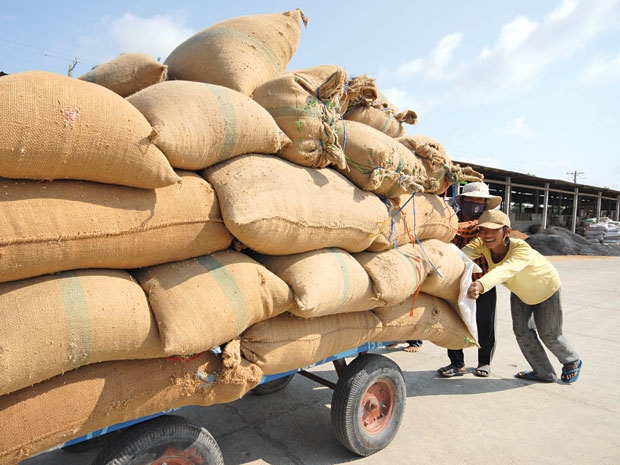 rice export, rice farmer, interest group, group interest, food, NA, market, price
