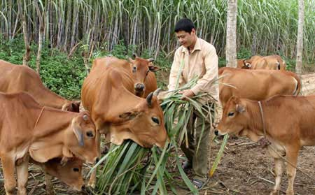 'Cow Bank' project assists poor farmers in escape from poverty