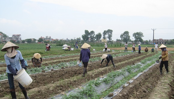 Pollution in agriculture gets increasingly high - News VietNamNet