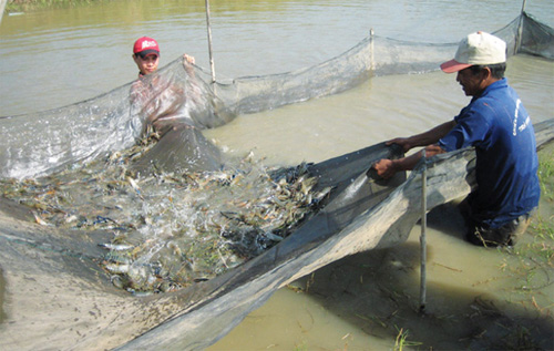Excellent openings for Vietnam to boost shrimp exports have come