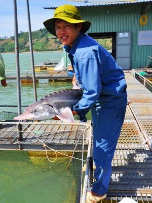 freshwater fish, sturgeon, rare fish, breeding