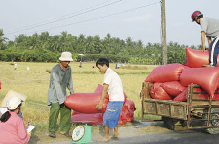 Can Tho City, Mekong rice farmers, property market, domestic rice prices, export prices