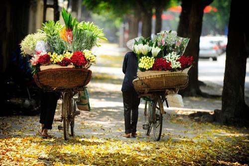 flower bike, mobile flower shop, hanoi, romantic