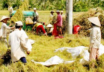 GMO barrier, rice export, exporter, vo tong xuan