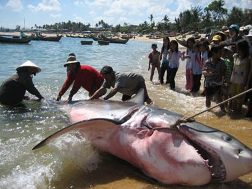 giant fish, vietnam, shark, whale, giant carp, mekong