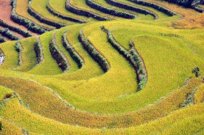 hoang su phi, terrace fields