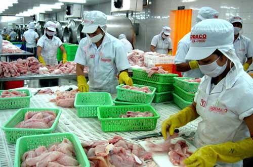 Catfish farmers, Mekong Delta, catfish market, VASEP, Hung Vuong Seafood Company