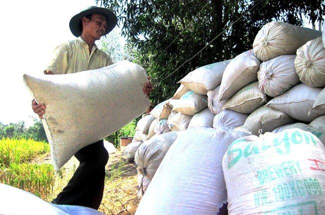rice land, rice area, mekong delta, farmers