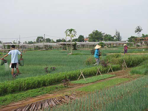 Hoi An, Tra Que Vegetable Village, De Vong River, natural cultivation