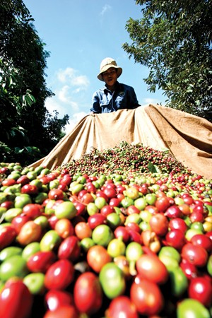 coffee industry, collapse, vicofa