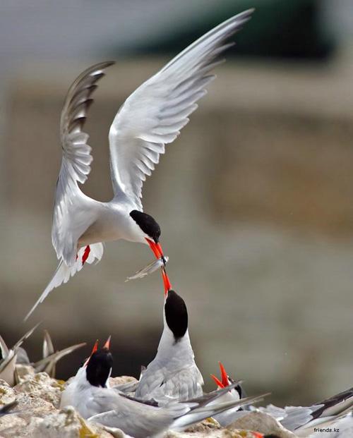 Bird watching tours in Vietnam
