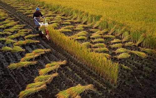 tpp, japan, vietnam, agricultural export