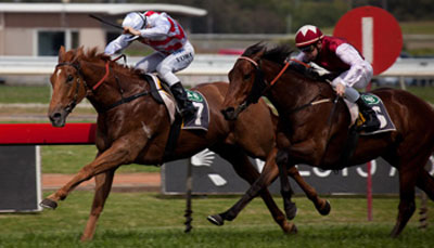 Australian scientists use 3D printing for improving racehorse's performance