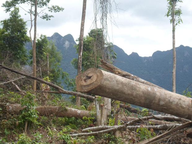 Protective forests devastated everywhere, simultaneously